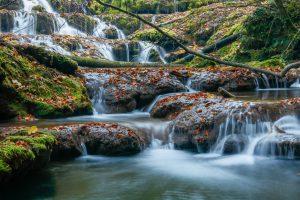 eau rivière forêt défi planète