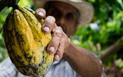 Commerce équitable lointain ou achat local : quel choix écologique ?