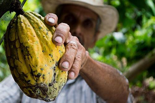 producteur cacao commerce équitable